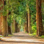 plus d'arbres plus de vie