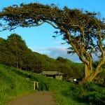 magnifique arbre à vent