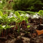 avantages permaculture