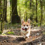 chien qui court dans la forêt