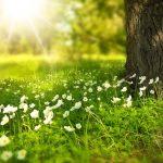 arbre et pelouse